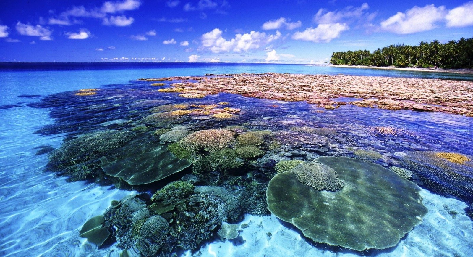 at_coral-island-hon-dao-san-ho-me-hon-du-khach_9cb81ebf16e8b0adc022cf539e3fd6d2