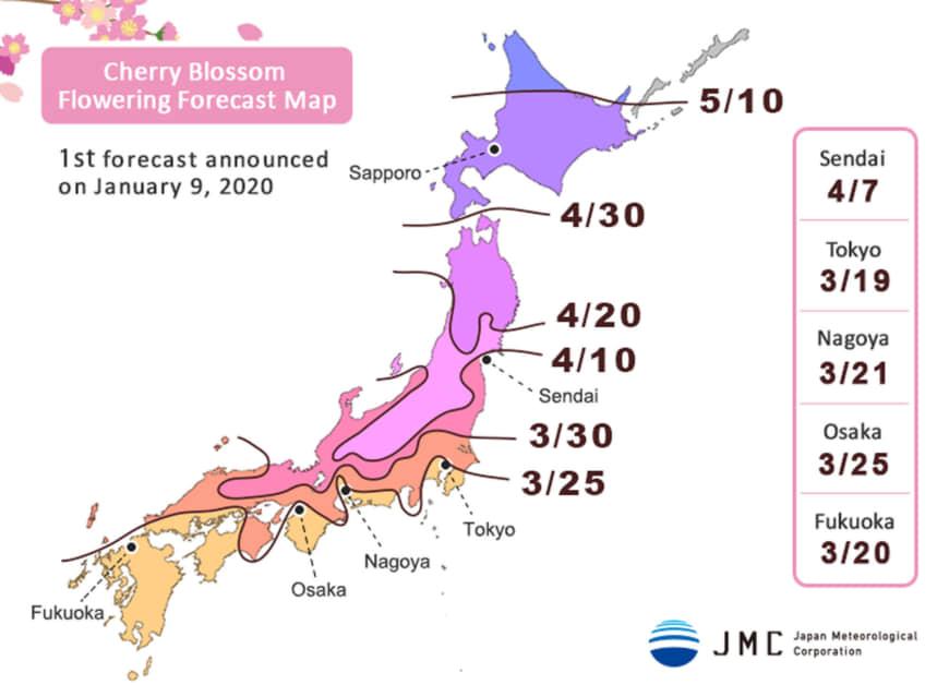 n-sakura-a-20200111-870x628