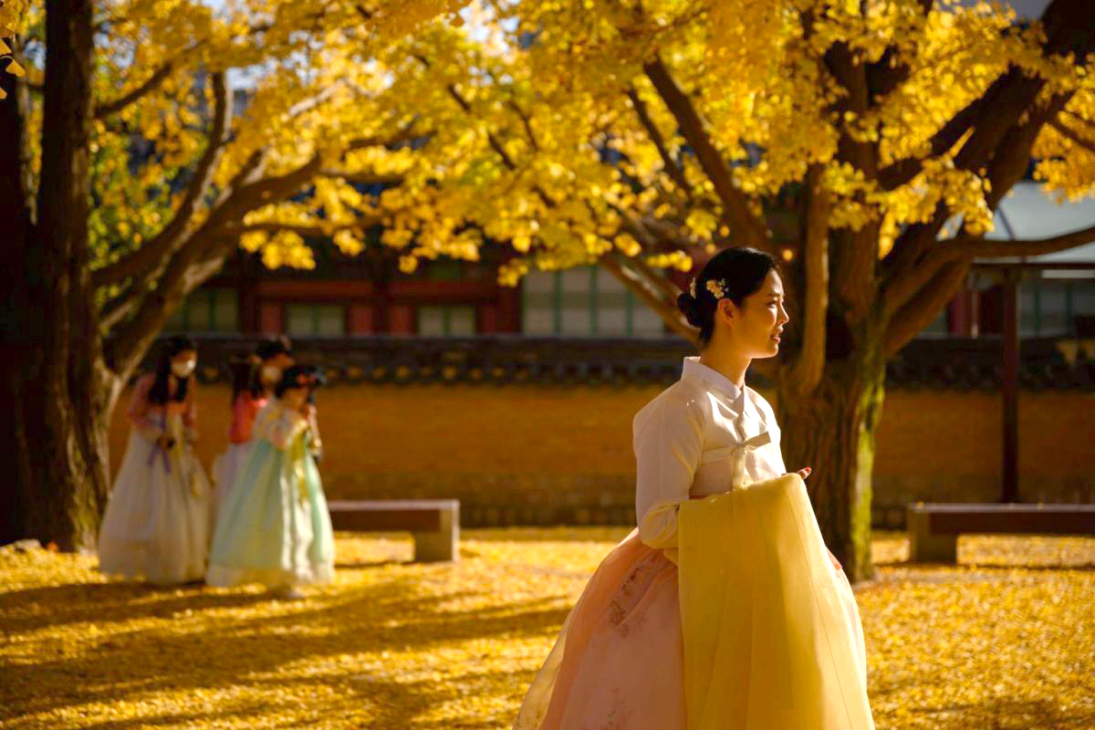 Du khách diện trang phục truyền thống hanbok dạo bước dưới tán cây rẻ quạt rợp sắc vàng tại khuôn viên Gyeongbokgung, Seoul, Hàn Quốc. Ngoài thủ đô Seoul, du khách thưởng ngoạn sắc thu ở Hàn Quốc không thể bỏ qua đảo Nami, Gyeongjy hay vườn quốc gia Seoraksan. Ảnh: AFP.
