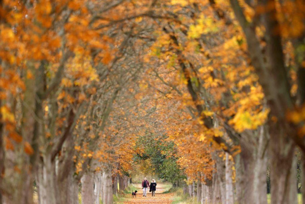 Những hàng cây rợp sắc vàng cam trong một khu vườn ở thị trấn Moerfelden, Đức. Ảnh: EPA-EFE.