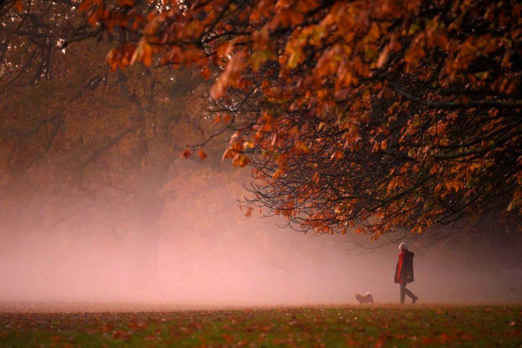 Một sớm bình yên tại công viên Greenwich, London, Anh. Tại xứ sở sương mù, một số nơi du khách có thể khám phá cảnh đẹp mùa thu là các công viên Greenwich, Victoria, Hampstead Heath hay Richmond, nơi có nhiều hươu sinh sống. Ảnh: AFP.