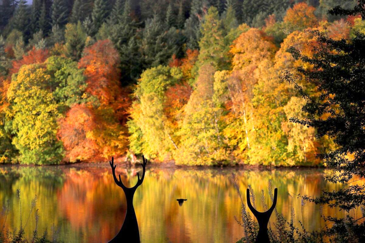 Rừng lá vàng phản chiếu trên hồ Loch Faskally ở thị trấn Pitlochry, Scotland. Ảnh: Reuters.